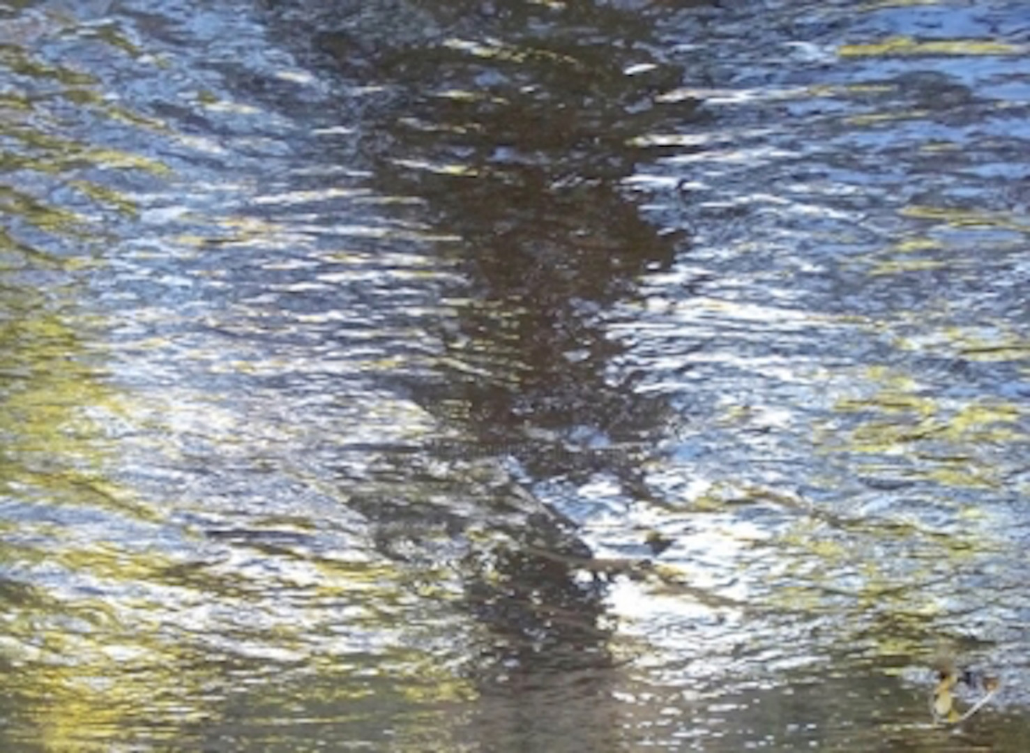 """Curtis H. Jones - ABSTRACT NATURE I - """"Shimmering"""", Large Canvas"""